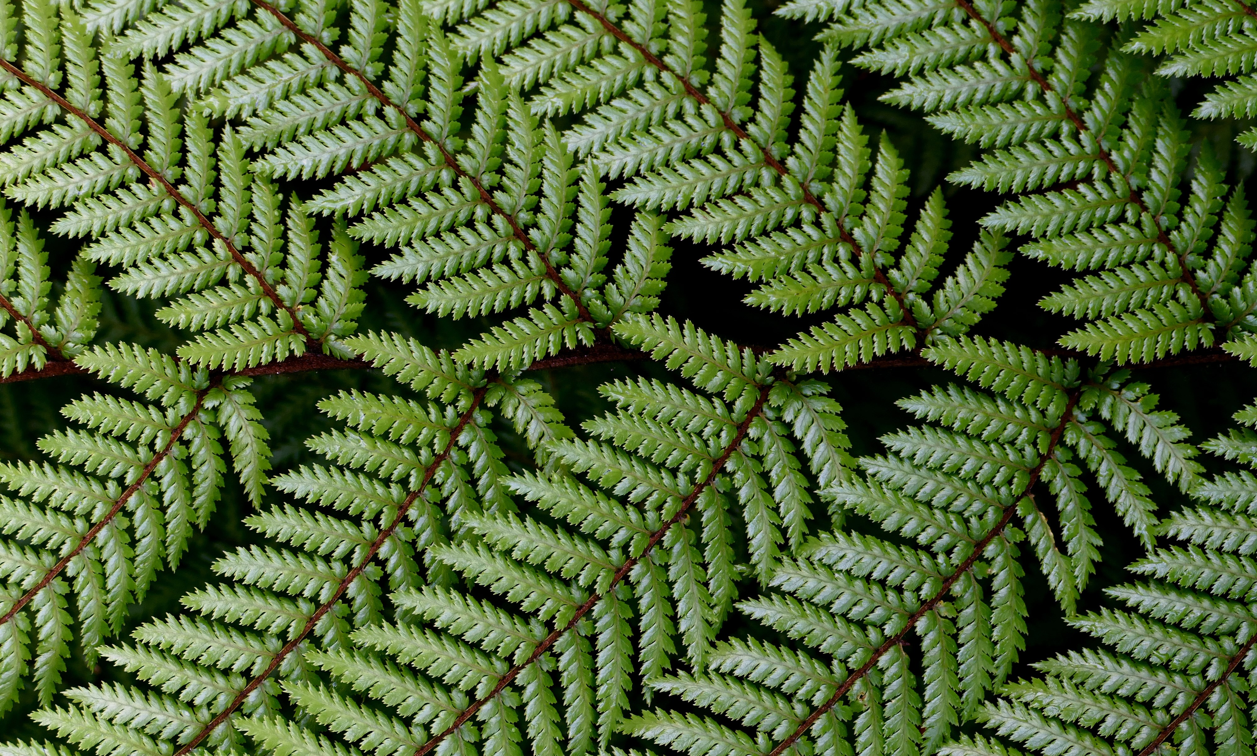 Fern 4k Ultra Hd Wallpaper High Quality Walls