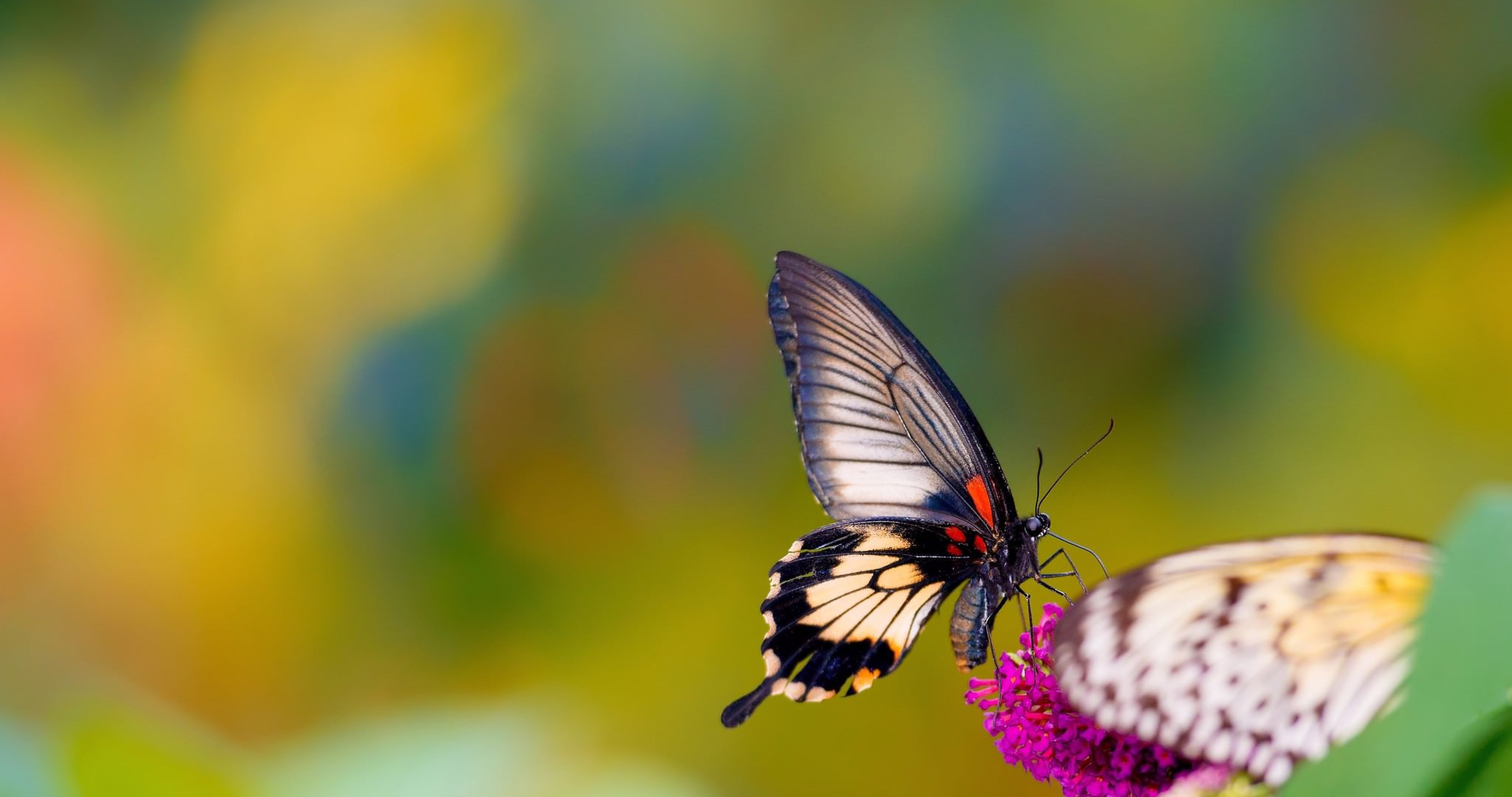Butterfly In Nature 4k Ultra Hd Wallpaper High Quality Walls