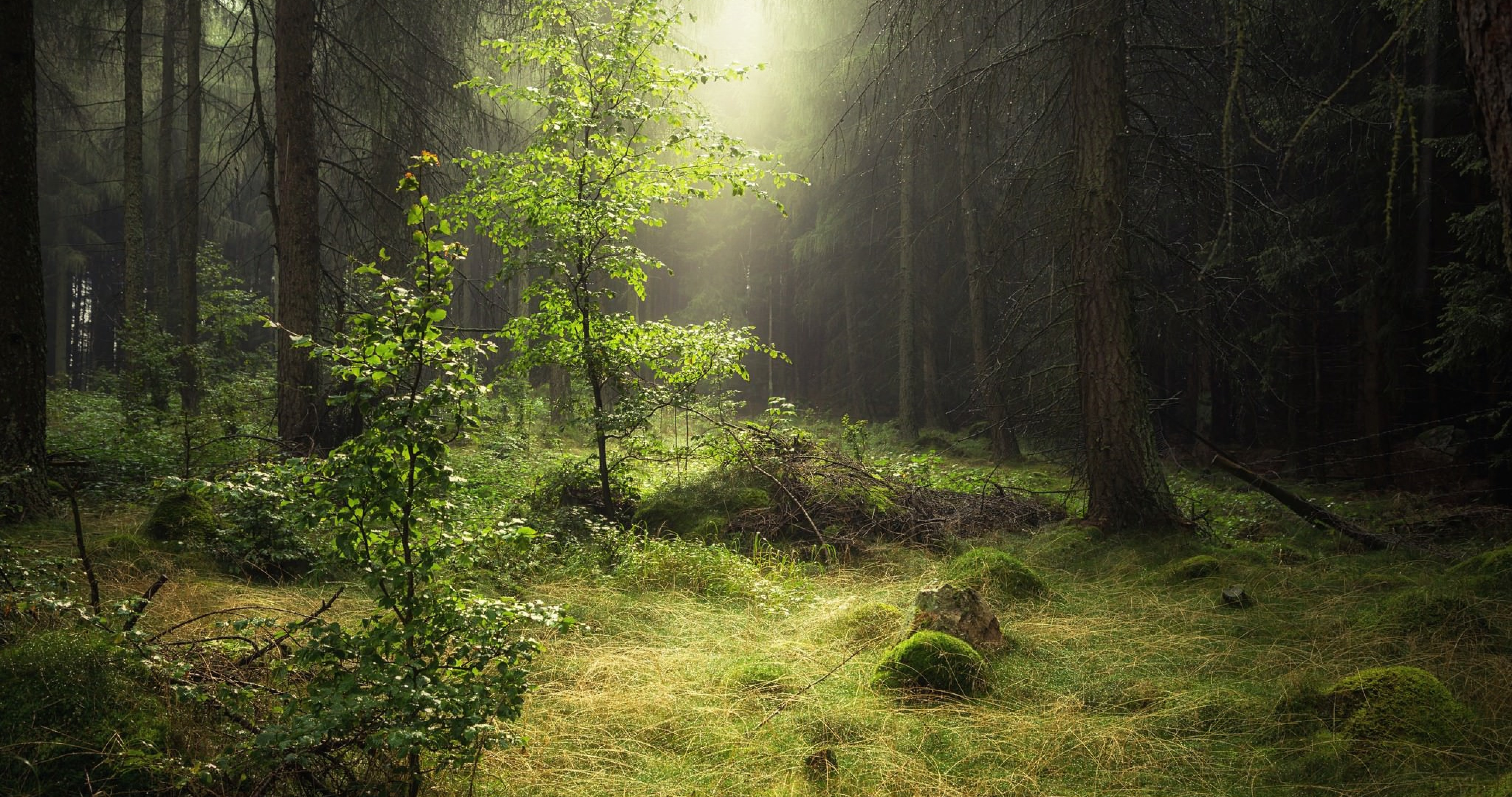 Amazing Wallpaper High Quality Forest - 71548-morning-forest-nature-4k-ultra-hd-wallpaper__nature  Photograph_245889.jpg