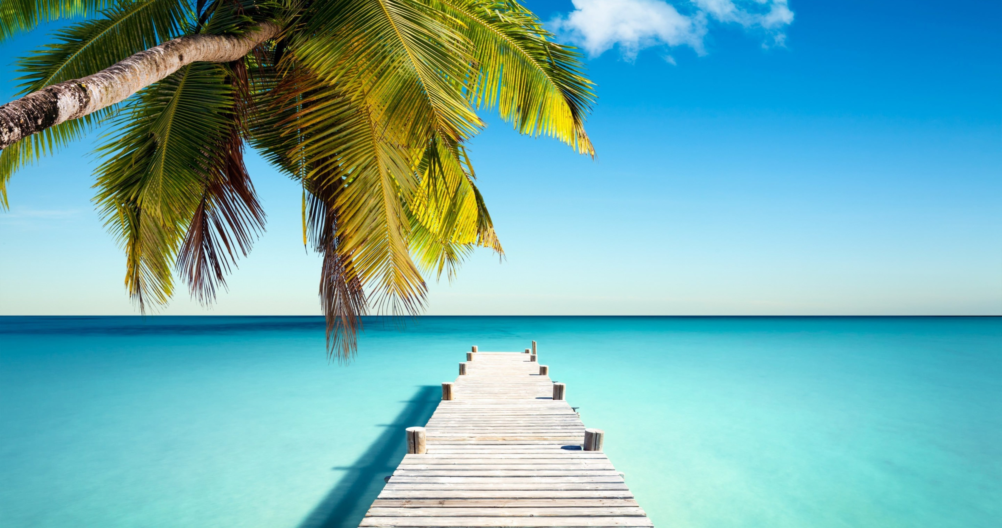 tropical paradise with palm 4k ultra hd wallpaper » High ...
