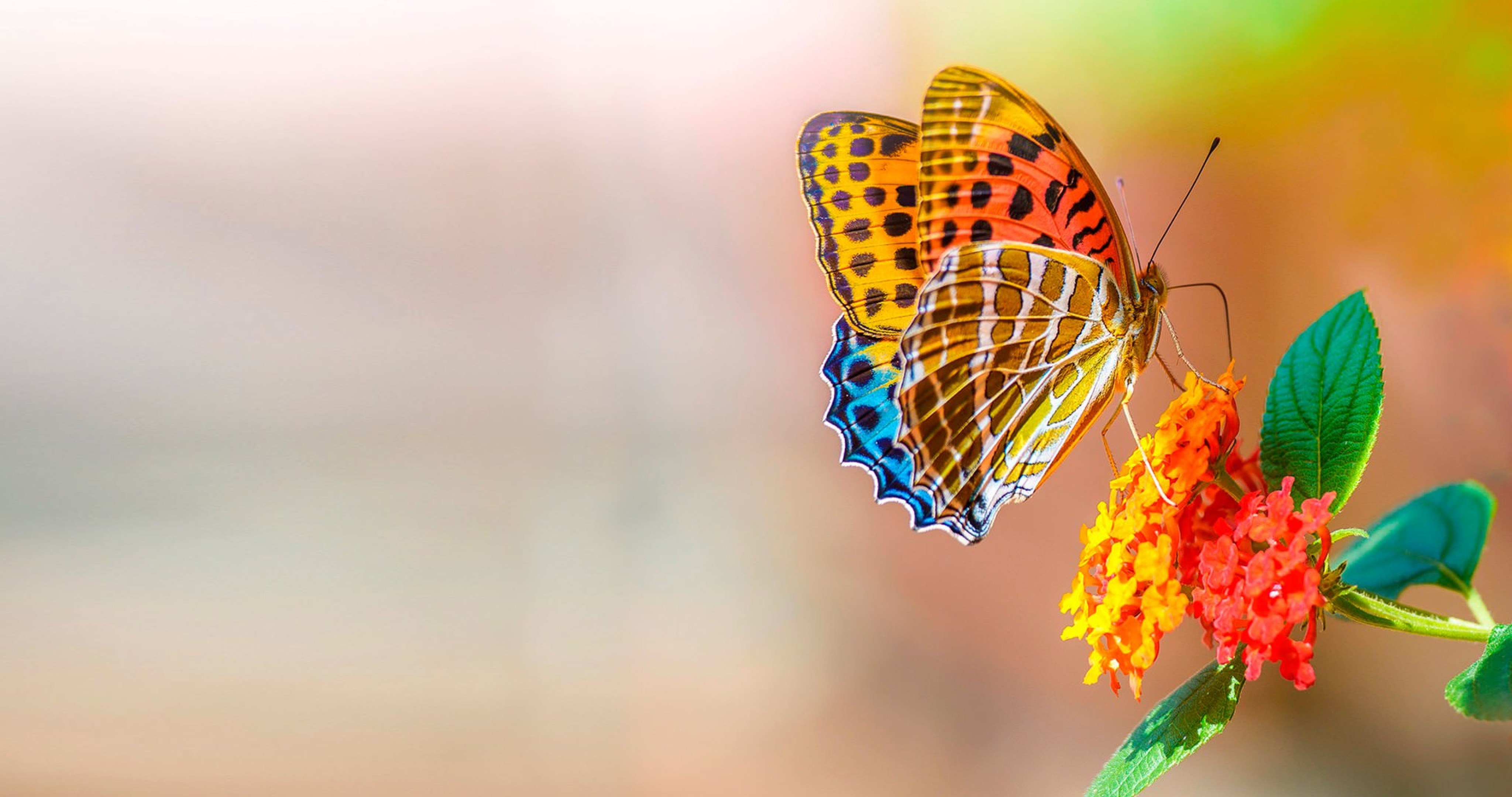 Download Wallpaper High Quality Butterfly - 72394-butterfly-and-flower-4k-ultra-hd-wallpaper__nature  2018_73496.jpg