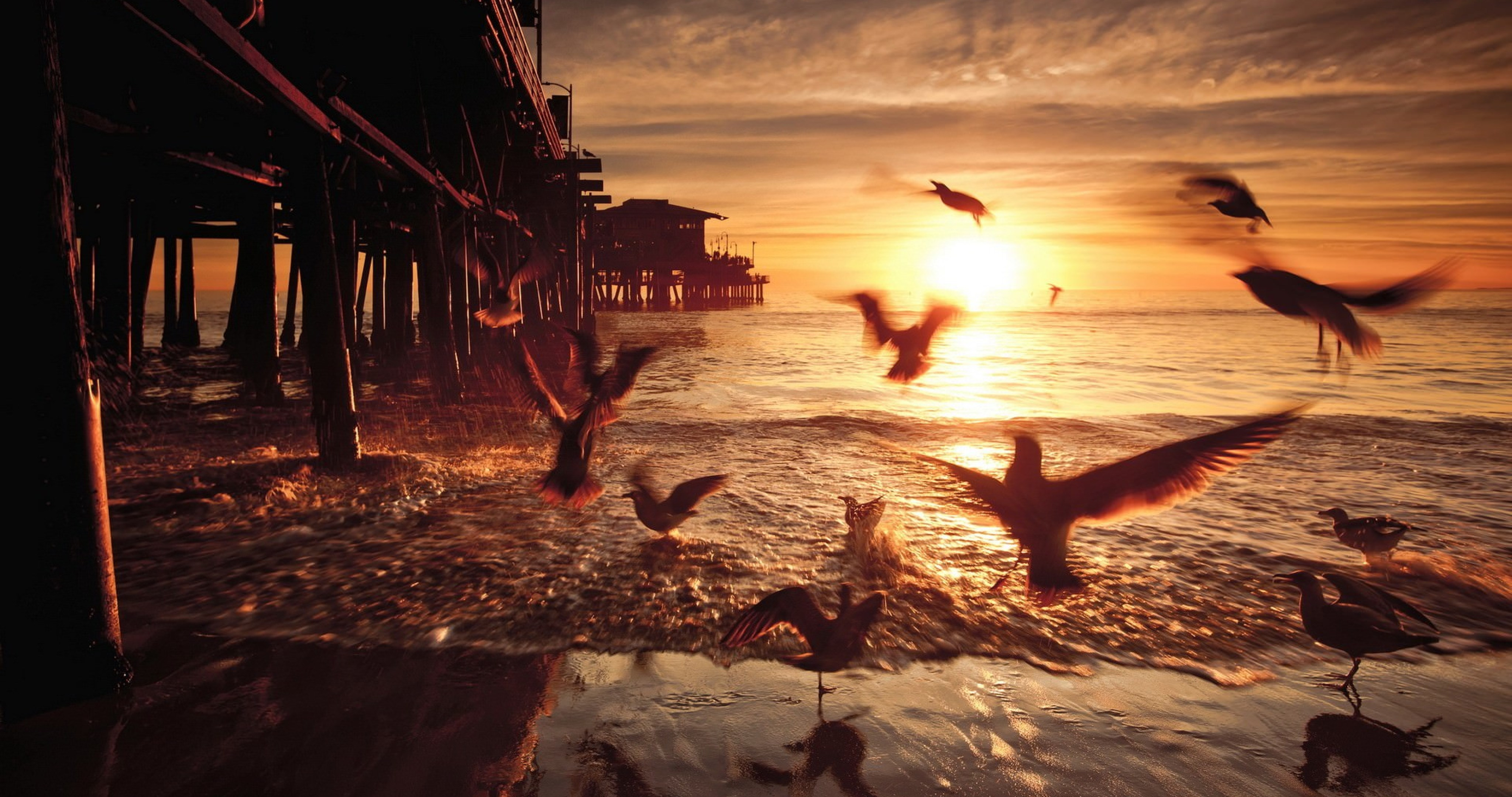 Santa Monica Sea Birds 4k Ultra Hd Wallpaper High Quality