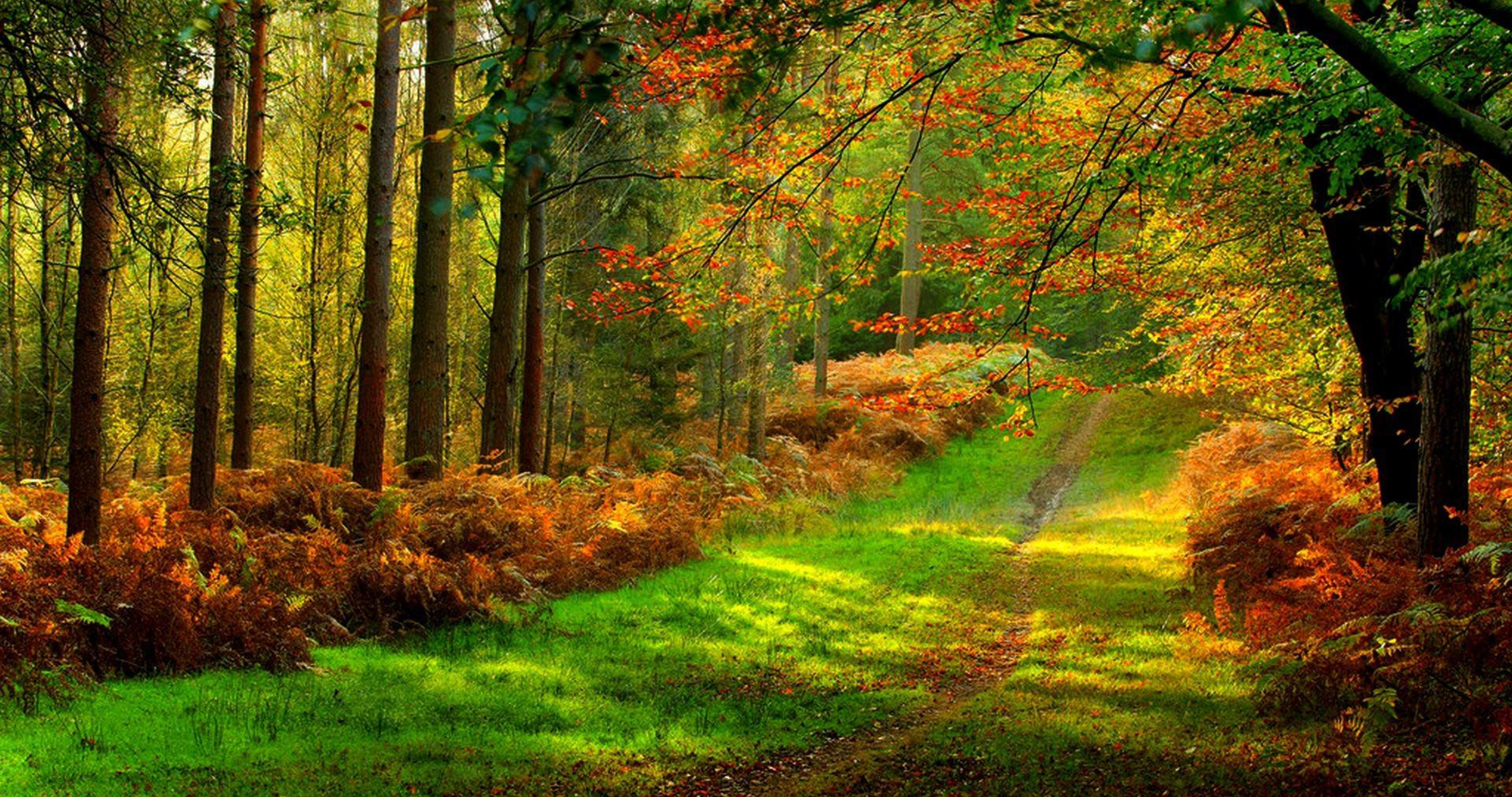 Forest 4k Quality Iphone Wallpaper: Forest Road Colorful 4k Ultra Hd Wallpaper » High Quality
